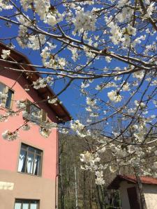 La Locanda dei Ciciu, Hotel  Villar San Costanzo - big - 21