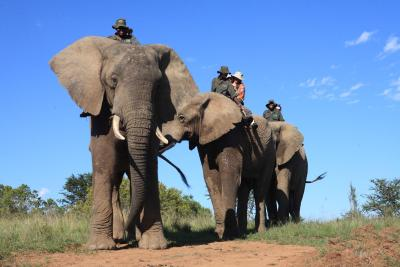Addo Elephant Back Safaris