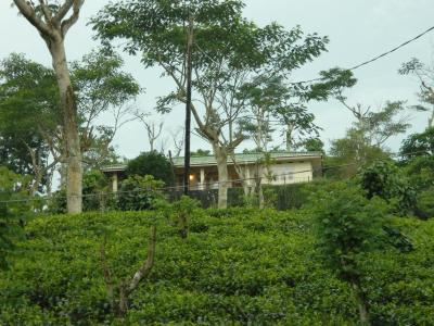 Wille Group Plantation Bungalow