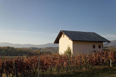 Vineyard cottage Kambic