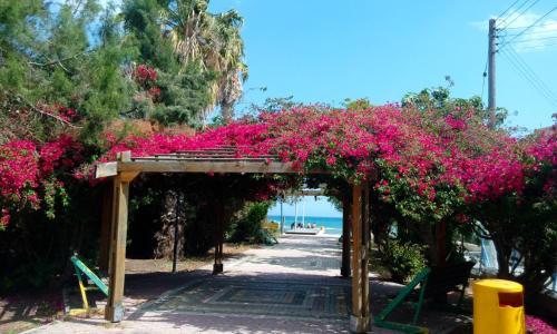 Kvartira u moria, Larnaka