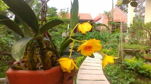 An Phu Homestay, Ninh Binh