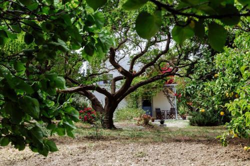Margouno Eco Cottage