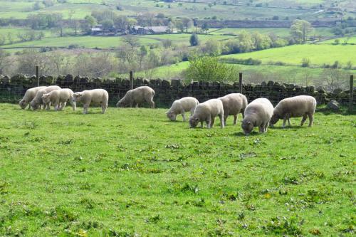 Moorland View Farm B&B