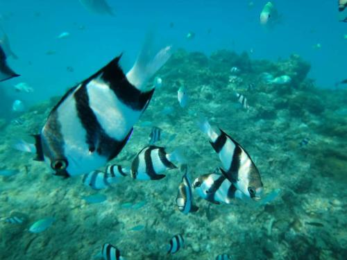 Equa Reef Maldives, Maradhoofeydhoo