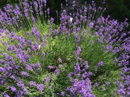 Les Violettes De Malleville