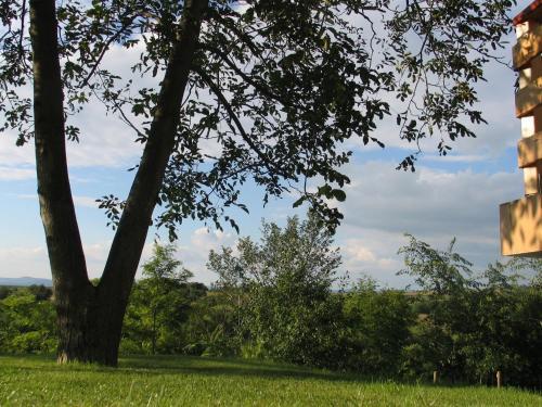 Robiniapark 2