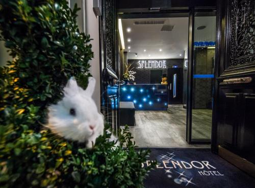 Hotel Splendor Elysées