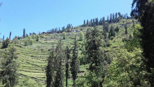 Sojha Heights Green View Guesthouse