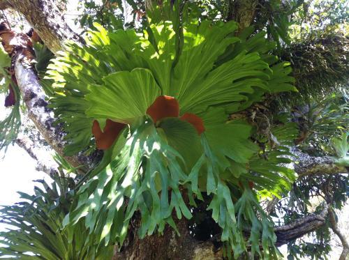 Rainforest Edge Noosa