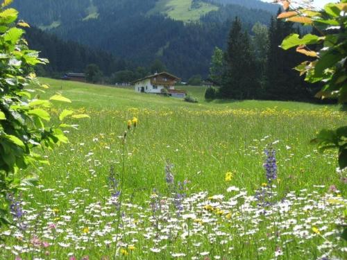 Haus Kaiserblick