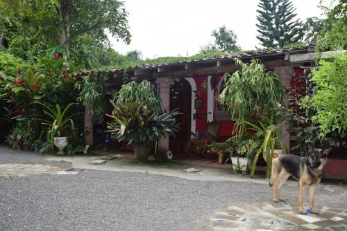 Finca La Paz, Cojutepeque