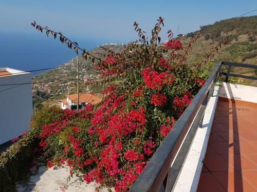 Madeira Gina's Village