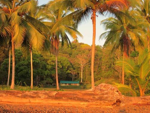 Jungle Retreat