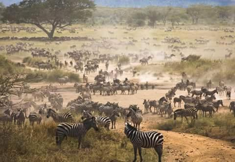 Ruaha Safaris
