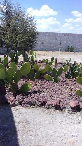 Rancho El Alamo