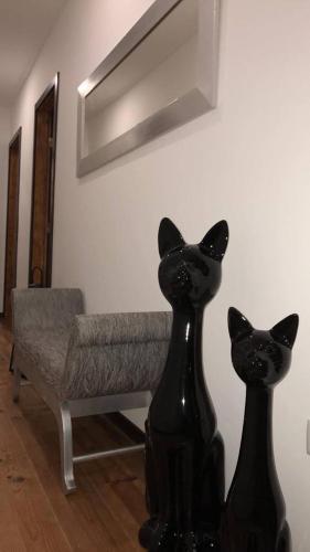 Casa Do Gato