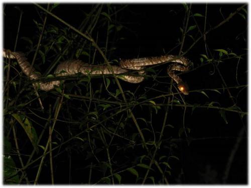 Ecolodge Amazon Canopy Expeditions, Barrio Florida
