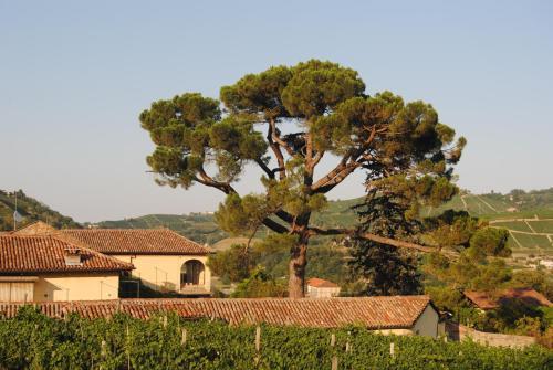 foto Tenuta Fagnanetto (Camo)