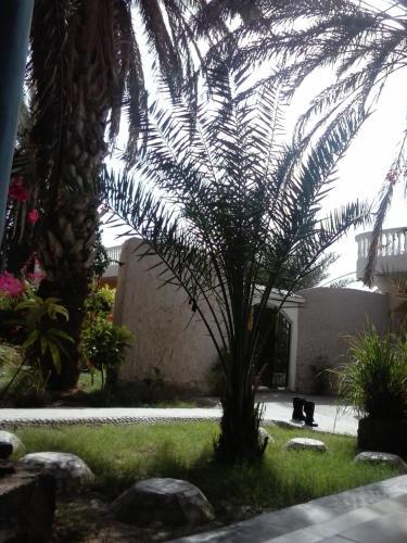 Palm Grove Oasis, Nouakchott