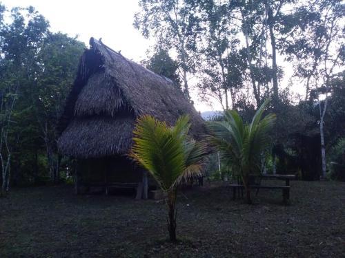 Amazonian Paradaise
