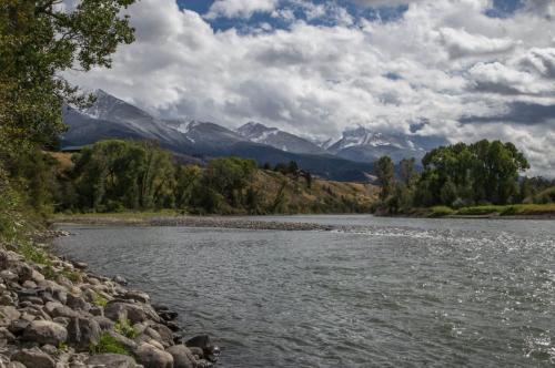 Livingston - Yellowstone Pines