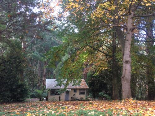 Healesville, 3777, Victoria - Accommodation, Links, Info
