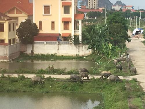 Lam's Homstay, Ninh Binh
