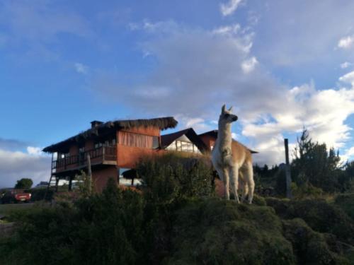 Mauca Pedregal, Quito
