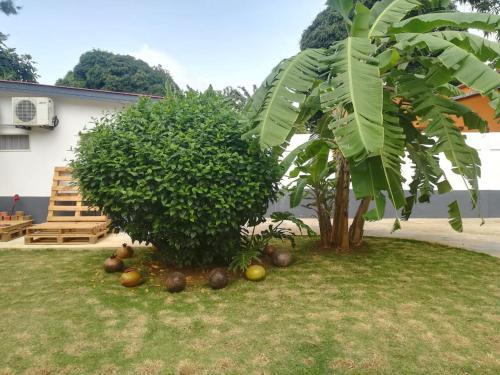 Palmtree Guest House, São Tomé