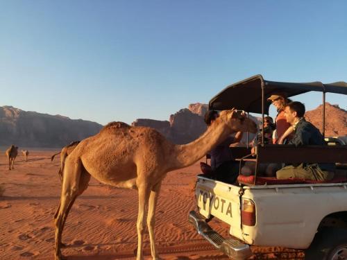 Authentic Bedouin Experience, 瓦迪拉姆