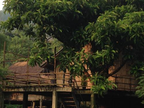 Tree House Homestay Akha Book Directions Navitime Transit
