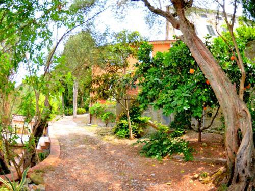Collina Lagomare, Massarosa