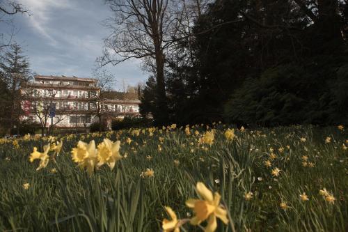 Balance Hotel am Blauenwald photo 6