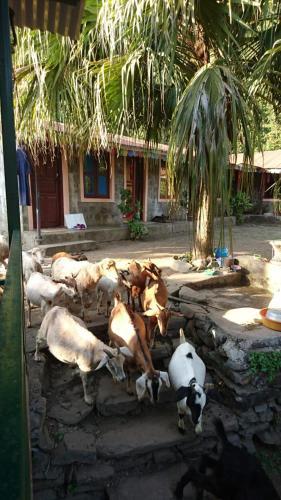 Himalaya Agro Farm Homestay, Deorāli
