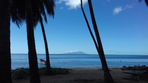 Palm View, Laborie
