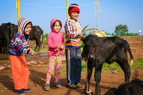 Cyka Farm Stay