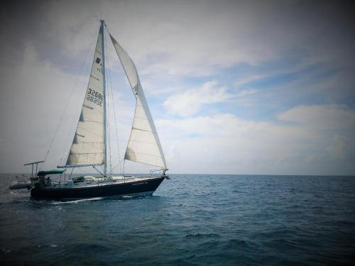 Life on board Bocas del Toro, Bocas del Toro Town