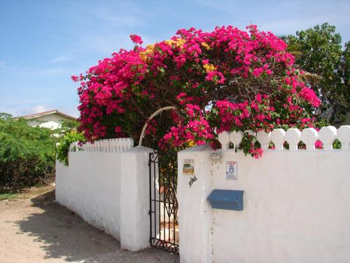 Villa Bougainvillea Aruba, Palm Beach