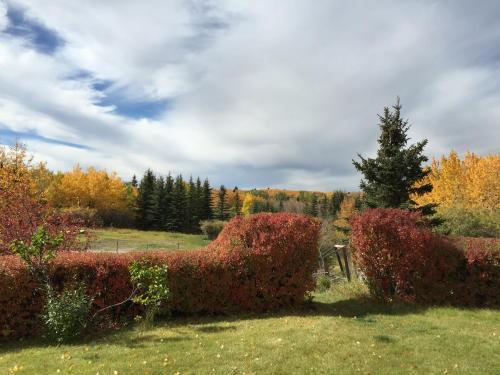 holy garden, Calgary
