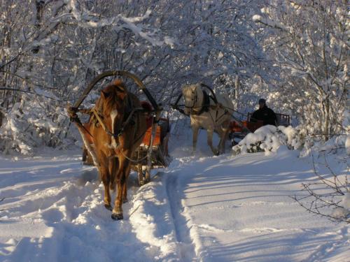 Tihuse Horsefarm B&B