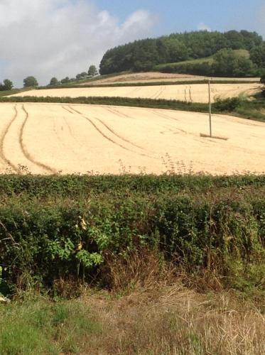 Lower Pinn Farm - Photo 3 of 21