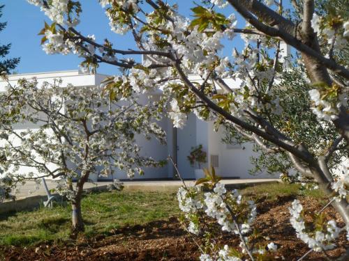 Il giardino dei ciliegi turi in italy