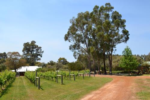 Island Brook Estate Winery and Chalets