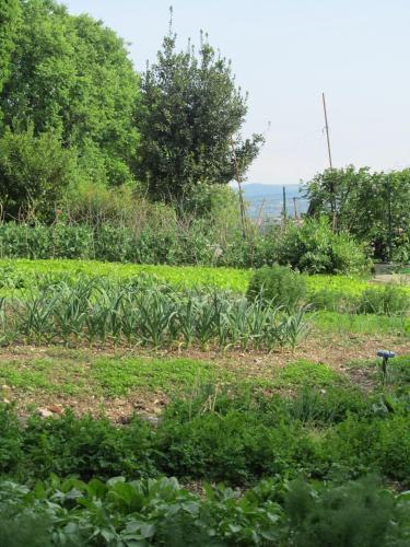 Tourist Farm Arkade
