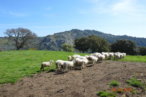 Agriturismo Costiolu
