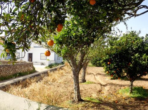Casas do Pomar Lagos Algarve Portogallo