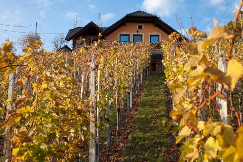 Vineyard Cottage Bregac, Smarjeske Toplice