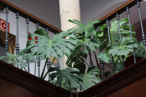 Habitación Doble con cama supletoria (3 adultos) - No reembolsable Hotel Las Casas del Consul 6
