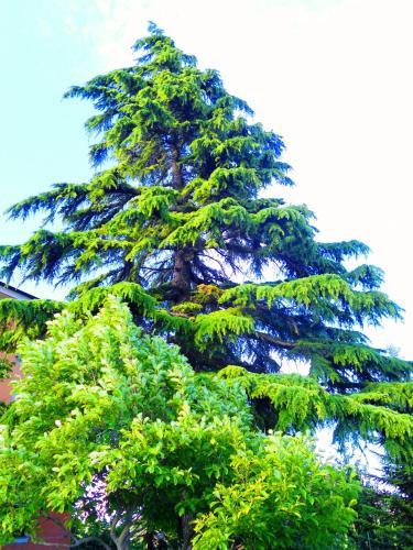 foto Il Cedro (Rocca Grimalda)